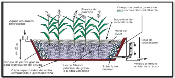 seccion longitudinal biofiltro